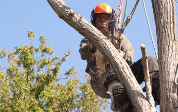 finding qualified Harlow tree surgeons