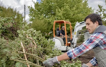 Harlow tree removal costs